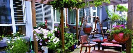 日记 养殖 花卉/家庭室内养殖花卉注意事项